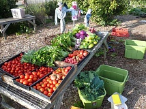 SUBMITTED PHOTO  - Join the Community Supported Agriculture (CSA) program at Luscher Farm and receive a box of fresh, locally grown produce each week through October.