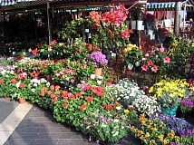 SUBMITTED PHOTO  - The West Linn Adult Community Center will host its annual plant sale this weekend at the center. They will offer hanging baskets, vegetable starts, annuals and perennials.