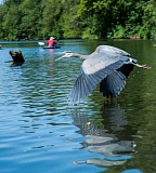 SUBMITTED PHOTO  - Spend the day outdoors with the family May 20, during the annual Tualatin River Bird Festival, at the Tualatin River National Wildlife Refuge, 19255 S.W. Pacific Highway in Sherwood.