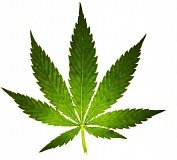 COURTESY PHOTO - Marijuana leaf