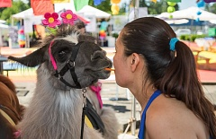 OUTLOOK FILE PHOTO - Last year Rock the Block had thousands go to enjoy all the fun activities, including hanging out with a llama.