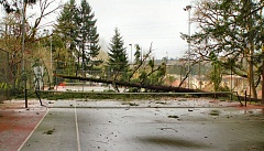 DAVID F. ASHTON - A 75-foot-tall Douglas fir lay across a Sellwood Park tennis court, after toppling over amidst rain and strong winds during the night of March 2nd.