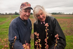 OUTLOOK PHOTO: JOSH KULLA - Julie and Tony Schedeen grow 30 varities of berries to sell at farmers markets.