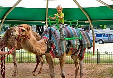 DAVID F. ASHTON - Camel rides anyone? Collin Turkington gets his first camel ride at this years Multnomah County Fair in Oaks Park.
