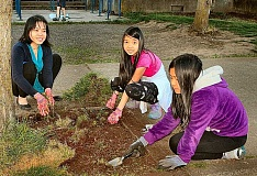 DAVID F. ASHTON - Thuy Nguyen, Kimberly Vu, and Emily Vo, were among volunteers helping spruce up Lane Middle School in May; these three were cleaning up the tree beds.