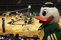 TRIBUNE PHOTO: STEVE BRANDON - The Duck watches Oregon volleyball's intrasquad game Saturday night at Matthew Knight Arena.