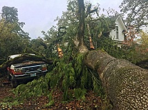 NEWS-TIMES PHOTO: JOHN SCHRAG - This cedar came crashing down on Dan and Becky Crume's house amd vehicles on Cedar Street Saturday afternoon.