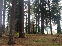FRIENDS OF JENNINGS LODGE  - Hundreds of trees are slated to be logged if the development in Jenning Lodge is approved.