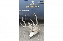 OREGON STATE POLICE PHOTO - Oregon State Police have arrested two men, including one from Warm Springs, for the poaching of a buck deer in Wheeler County.