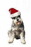 SUBMITTED PHOTO - DoveLewis Emergency Animal Hospital shares tips for keeping pets safe this holiday season.