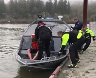 PHOTO COURTESY: CCSO - Clackamas County Sheriff's Office deputies took a car-theft suspect into custody after he fled into the Willamette River.