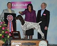 SUBMITTED PHOTO - Many dogs that compete and place at the Rose City Classic go on to compete at other nationally recognized shows, including the 2016  all breed Best in Show Winner, a German Shorthaired Pointer named CJ, along with his handler Valerie Nunes-Atkinson. CJ went on to win Best in Show at Westminster.