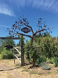 SUBMITTED PHOTO - The Clackamas Community College Foundation set aside $10,000 to build a Giving Tree that will use the tree above as a model. Funds raised by sales of leaves for the Giving Tree will support upkeep of the Environmental Learning Center.
