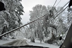 SUBMITTED PHOTO: LAKE OSWEGO POLICE DEPARTMENT - A downed tree leans against power lines Wednesday near Carman Drive and Waluga Drive. Police and fire officials responded to similar hazards throughout the city during the worst of this week's winter storm.