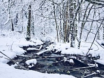 West Linn creek, coated in snow