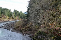 FILE PHOTO - Washington County must decide next week to stay in, or to opt out of, a lawsuit that pits 15 counties against the State of Oregon. The Tillamook Forest is one of the state-run forests in question.