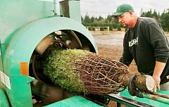 PMG FILE - Yamhill County is among Oregon's top producers of Christmas trees, a commodity that would be adversely affected if America pulled out of NAFTA, officials said.