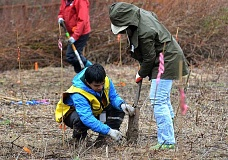 REVIEW PHOTO: VERN UYETAKE - Friends of Trees crew leader Sochetra Ly helps volunteer Donna White plant a bare root native sapling Saturday during a huge work party in Lake Oswego's River Run Park.