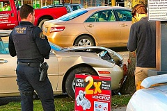 DAVID F. ASHTON - While veering away from a converging car on Powell Boulevard, this Lexus was stopped by a street tree.