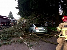 COURTESY OF THE CLACKAMAS COUNTY SHERIFF'S OFFICE - Trees fell across the Westside, including onto this car in Wilsonville, on Friday morning as a massive windstorm rips through the region.